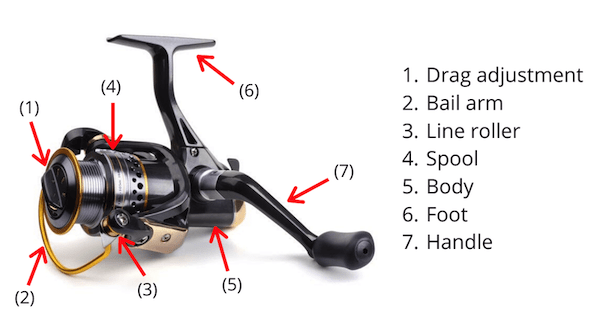 Photo of a spinning reel with its parts labelled