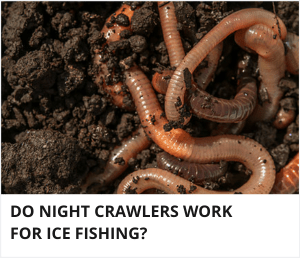 Do night crawlers work for ice fishing?