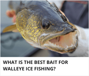 What is the best bait for walleye ice fishing?