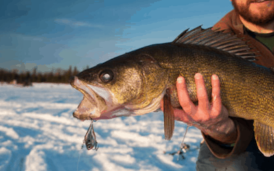 What pound test line should you use for walleye ice fishing?