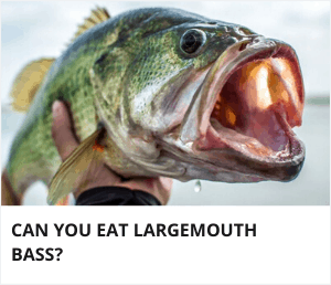 Can you eat largemouth bass