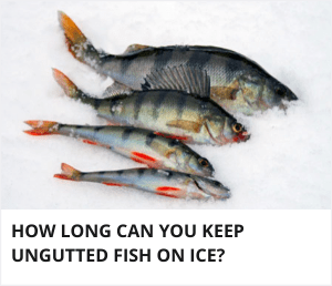How long can you keep ungutted fish on ice