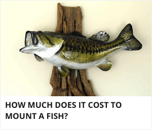 How much does it cost to mount a fish?