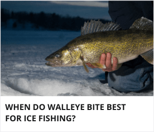 When do walleye bite best for ice fishing