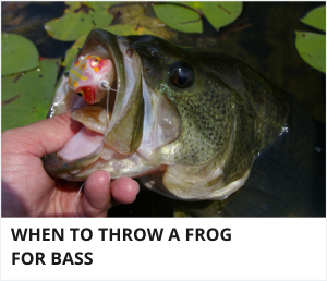 When to throw a frog for bass