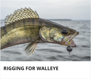 Rigging for walleye