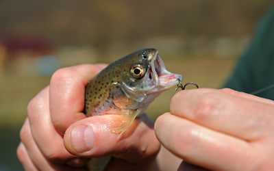 Hook size for trout
