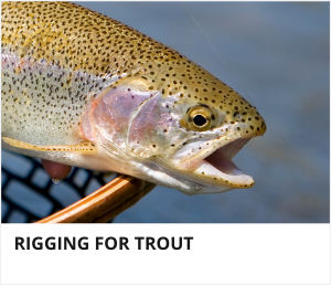 Rigging for trout