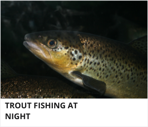 Trout fishing at night
