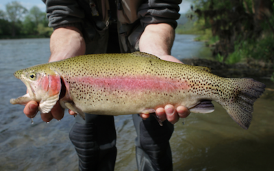 Trout fishing from shore