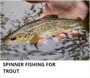 Trout fishing with spinners