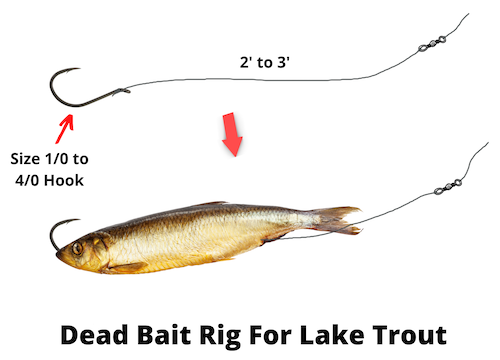 Dead bait rig for lake trout