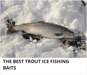 Trout ice fishing baits