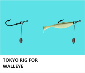 Tokyo rig for walleye