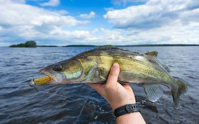 Best line for walleye jigging