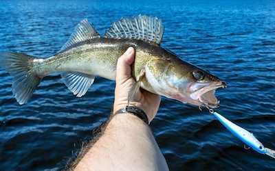 Walleye trolling speed